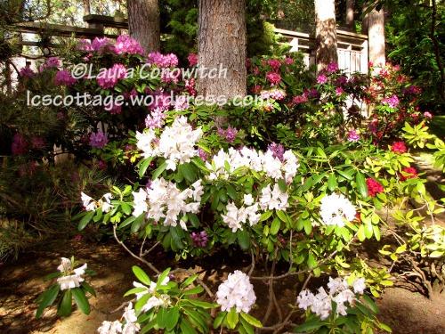 Manito 06-15-2012 IMG_3441bc