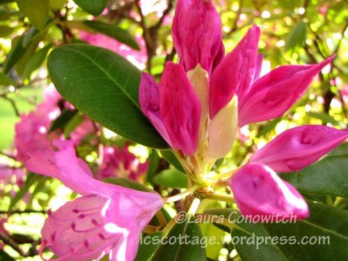 Manito 06-15-2012 IMG_3444bc
