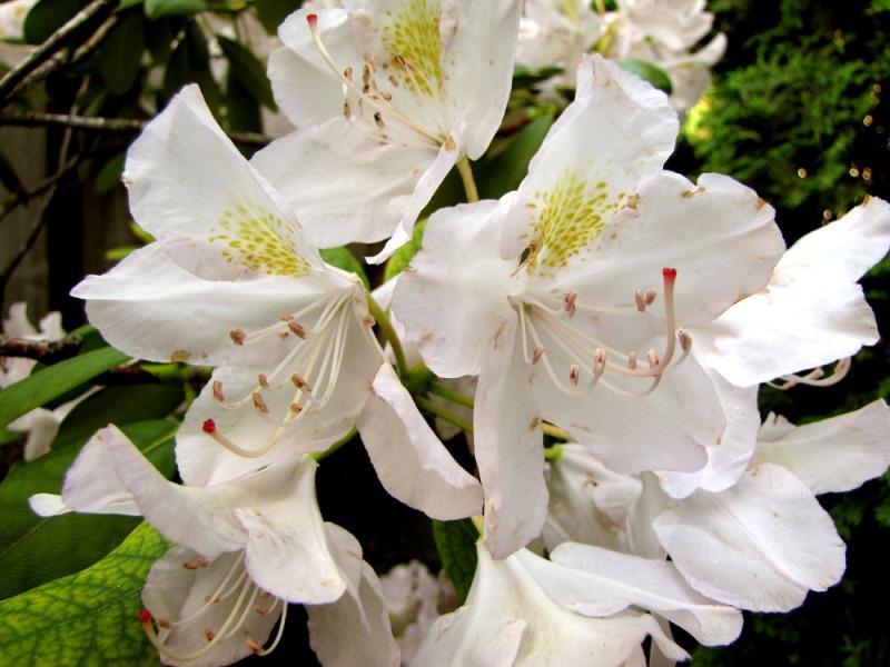 Manito Park and Botanical Gardens – Part 2