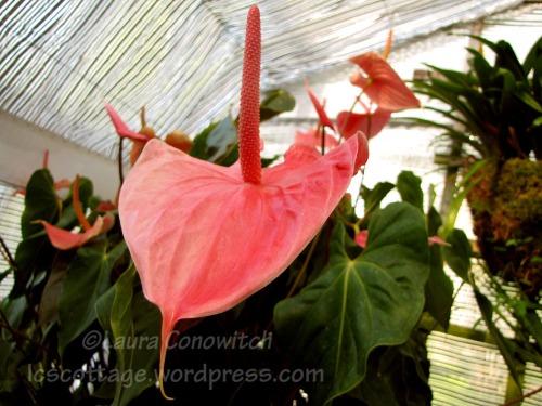 Manito 06-15-2012 IMG_3531bc