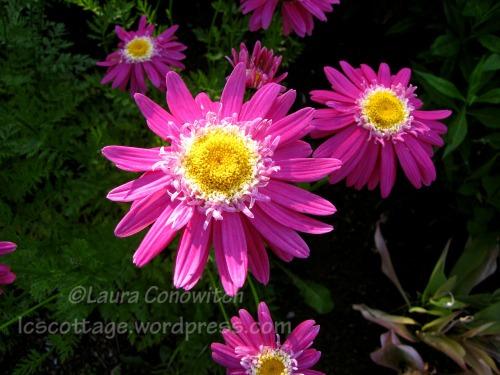 Manito 6-15-2012 IMG_3557bc
