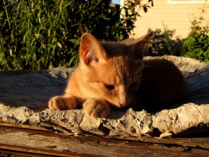 Kitten in Birdbath