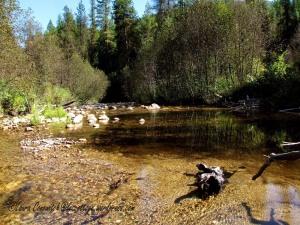 Log Flume Heritage Site