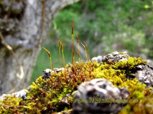 Moss Living on the Apple Tree Trunk