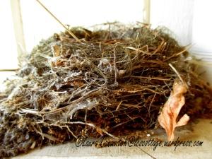 Flycatcher Nest