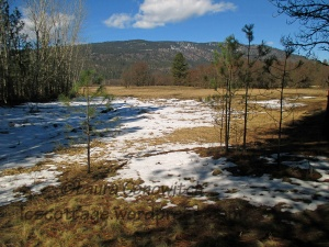 Old Kettle Falls