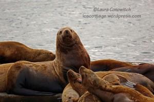 Alaska Harbor Dinner Cruise