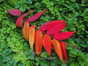 Garden Fall Color