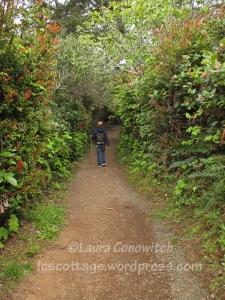 Sequoia Creek Trail
