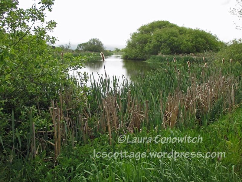 Arcata Marsh & Wildlife Sanctuary