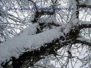 Snow January 12-2020